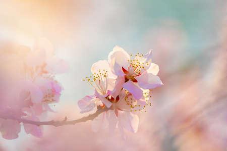 peach blossom bloom Reklamní fotografie - 119669040