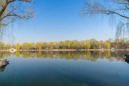 early spring weeping willow and lake scenery