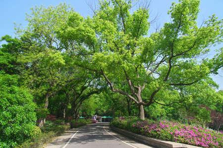 Urocza sceneria w wiosennym parku leśnym