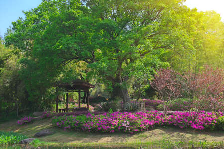 Charming scenery in the spring forest park