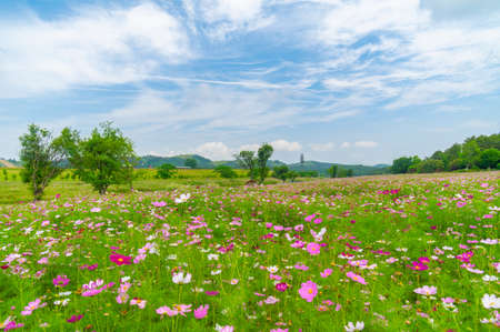 Early summer scenery of Wuhan Mulan Grassland Scenic Area, Hubei