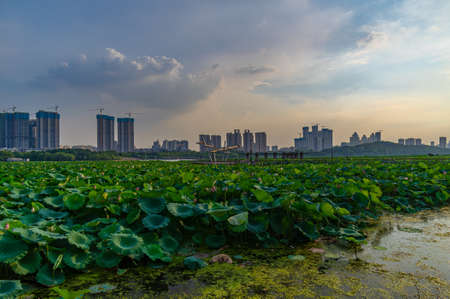 Wuhan Summer City Zhonghu National Wetland Park Sunset Scenery 免版税图像
