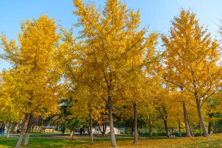 Hubei Wuhan Liberation Park late autumn scenery Reklamní fotografie