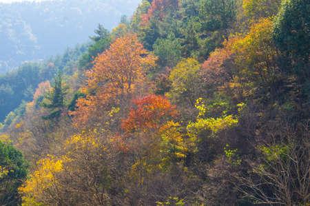 Late autumn scenery of Qingliangzhai Scenic Area in Wuhan, Hubei Foto de archivo