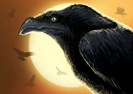 close uo: Close uo of crow in the sunlight while other crows circle in the sky.