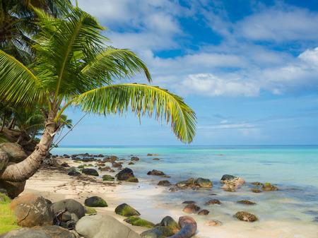 Tropica beach with cocononuts palm on a caribbean island Archivio Fotografico