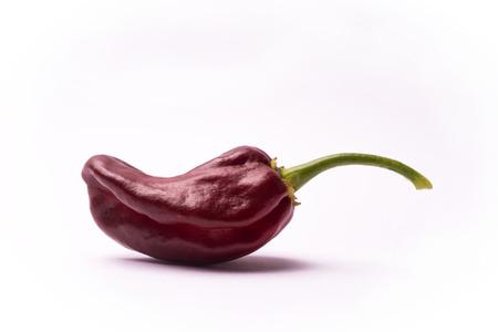 habanero: Chili pepper Habanero Chocolate