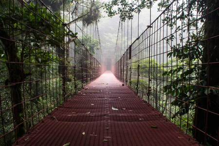 nebbia: Raining forest and trees with fog in central america