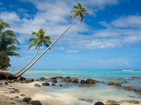 blu sky: Tropica beach with cocononuts palm on a caribbean island Stock Photo