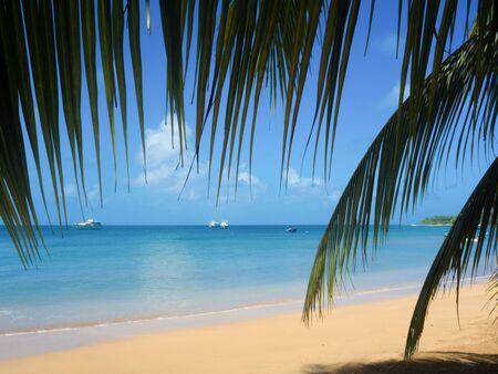 tropica: Tropica beach with cocononuts palm on a caribbean island Stock Photo
