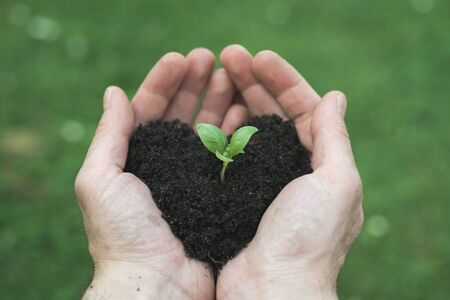 mans: mans hands holds heart shape soil with bud