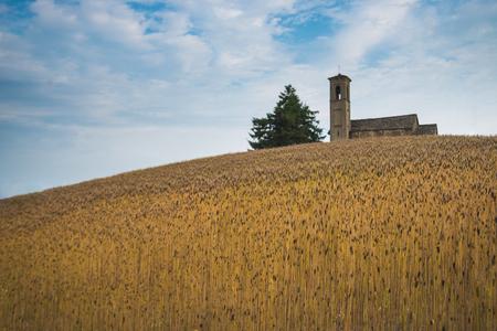 Einkorn triticum monococcum field hill in pedmont Italy Stock Photo