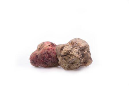 truffe blanche: Alba white truffle tuber on isolated white background