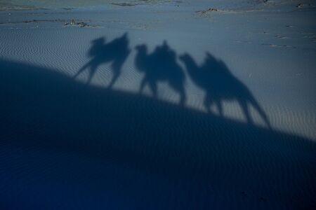 Camel shadow on a dune during nightg moonlight
