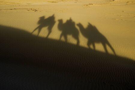 Shadow camel riding ona dune during sunset or sunrise