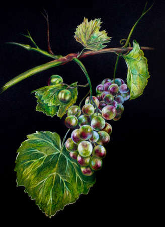 Delicious Hand drawn realistic bright 3d grapes branch on black background. Gardening, winery, restaurant menu, botanical, food illustration Zdjęcie Seryjne
