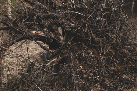 Dark spooky occult pagan witchcraft ritual legend forest roots branches texture. Photo wallpaper background in retro vintage faded processing