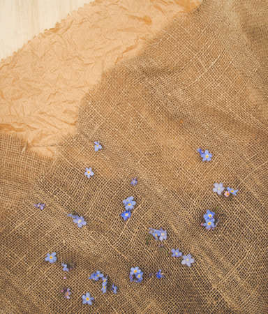 Blue tender forget-me-not flower on a rustic brown natural sackcloth canvas textile background. For card, invitations slide or wedding decor.