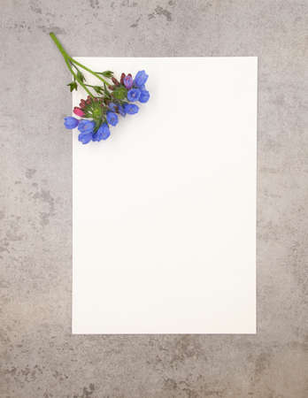 Blue violet tender minimalist spring flower on neutral grey marble stone background and white paper with free blank copy space for text. Ready design template for card, invitations, wedding decor. Foto de archivo