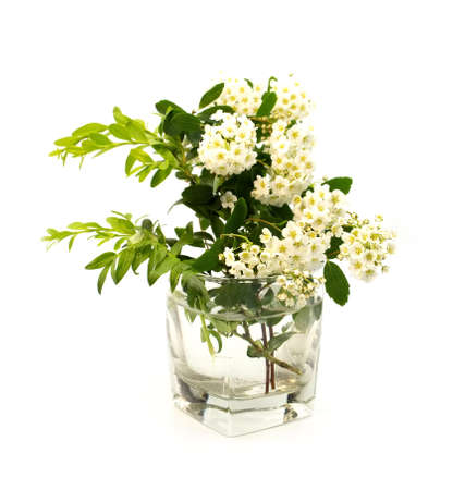 Tender white spring blossom flowers and green grass in transparent glass of water on isolated on white background.