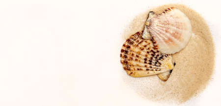 Beautiful sea shells and sand on white background