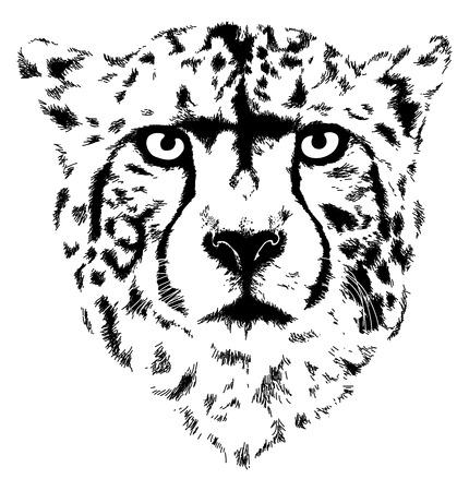 cheetah head Ilustracja