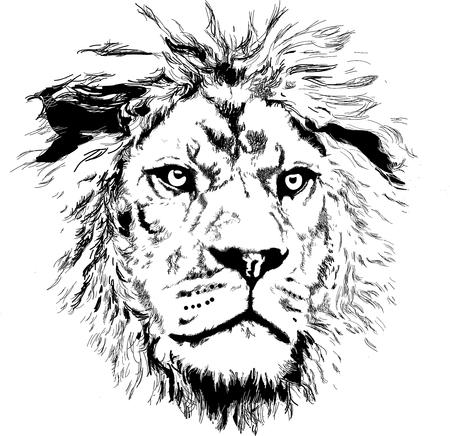 głowa lwa wektor