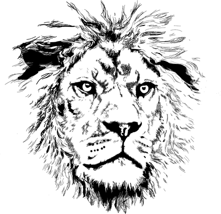 lion head vector Çizim