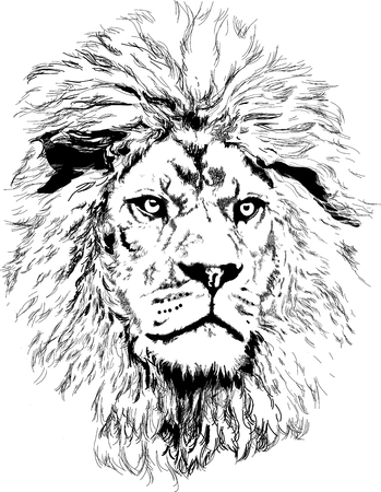 lion head vector Иллюстрация