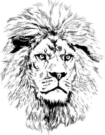 lion head vector Vectores