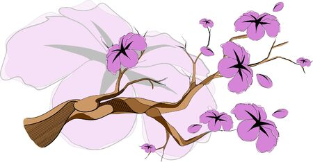 sketch sakura branch in vector format