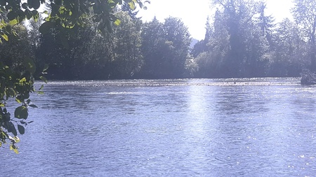 From bank of the Mckenzie River Banco de Imagens