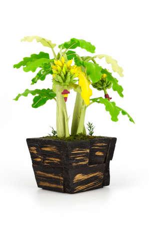 bundle: Banana bundle on a white background