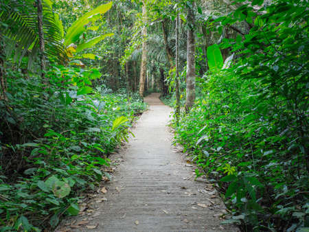Walkway Lane Path With Green Trees in Forest. Beautiful Alley, road in park in thailand