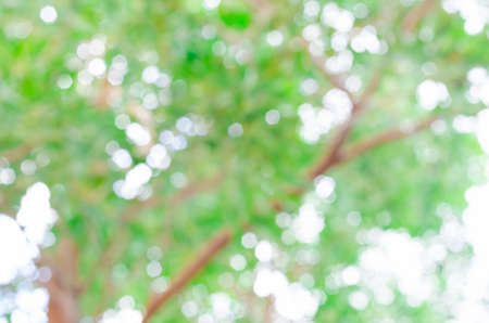 Defocused bokeh background of garden with blossoming trees in sunny day Фото со стока