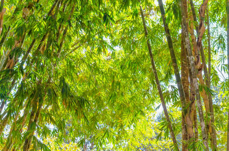 bamboo leaves background in the thailand Фото со стока