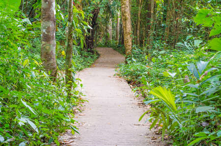Walkway Lane Path With Green Trees in Forest. Beautiful Alley, road in park in thailand Фото со стока - 90091319