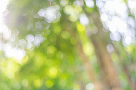 Defocused bokeh background of garden with blossoming trees in sunny day Фото со стока - 90091325