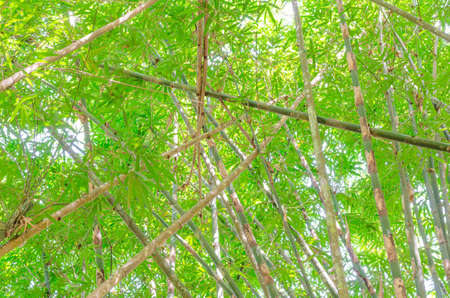 bamboo leaves background in the thailand Фото со стока - 90094660