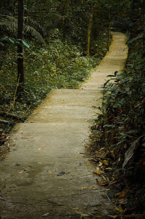 Walkway Lane Path With Green Trees in Forest. Beautiful Alley, road in park in thailand Фото со стока - 90094665