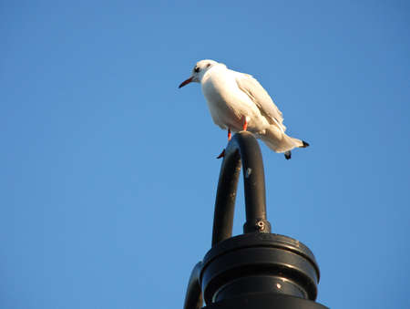 lampost: Bird perched on a lampost.