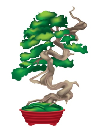 bonsai tree: Bonsai tree in a red vase