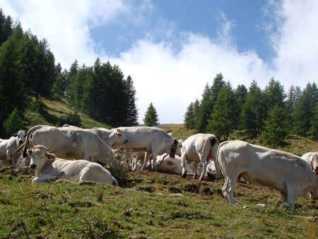 Pasture on Col de Tende, pass on the border between Italy and France Imagens - 14163698