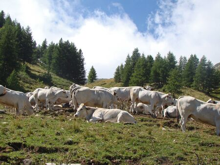 confines: Pasture on Col de Tende, pass on the border between Italy and France Stock Photo