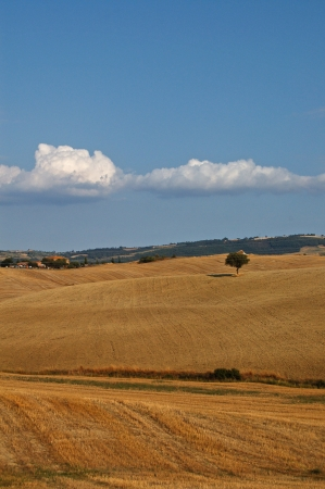 Countryside in typical summer Tuscan Landscape Stock Photo - 14163236
