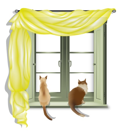 window curtains: Two cats on inner window sill looking out, isolated on white background Illustration