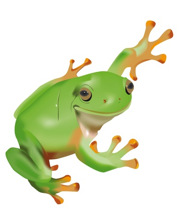 Vector frog isolated on white background
