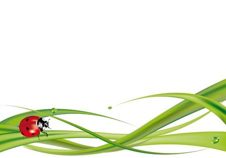 Lieveheersbeestje op gras op witte achtergrond