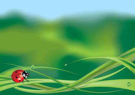 ochtend dauw: Lieveheersbeestje op gras met gekleurde achtergrond