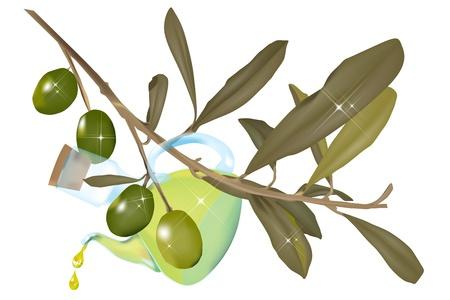 cruet: Cruet of oil hanging from an olive branch Illustration